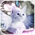 天使猫动态壁纸v1.0app下载_天使猫动态壁纸v1.0app最新版免费下载