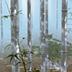 3D竹林动态壁纸汉化版BambooForest3Dv1.4app下载_3D竹林动态壁纸汉化版BambooForest3Dv1.4app最新版免费下载