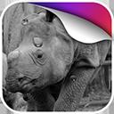 犀牛动态壁纸v1.0Android版app下载_犀牛动态壁纸v1.0Android版app最新版免费下载