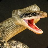蟒蛇狂暴手游下载_蟒蛇狂暴手游最新版免费下载