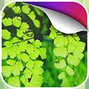 清新绿动态壁纸v1.0Android版app下载_清新绿动态壁纸v1.0Android版app最新版免费下载
