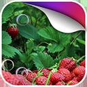 野草莓动态壁纸v1.0Android版app下载_野草莓动态壁纸v1.0Android版app最新版免费下载