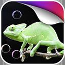 蜥蜴动态壁纸v1.0Android版app下载_蜥蜴动态壁纸v1.0Android版app最新版免费下载