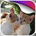 kitten动态壁纸v1.0app下载_kitten动态壁纸v1.0app最新版免费下载