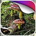 童话动态壁纸v1.0app下载_童话动态壁纸v1.0app最新版免费下载