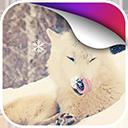 北极狐动态壁纸v1.0Android版app下载_北极狐动态壁纸v1.0Android版app最新版免费下载