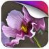 美丽独秀动态壁纸v1.0app下载_美丽独秀动态壁纸v1.0app最新版免费下载