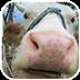 牛牛动态壁纸v1.0app下载_牛牛动态壁纸v1.0app最新版免费下载