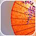 阳伞动态壁纸v1.0app下载_阳伞动态壁纸v1.0app最新版免费下载