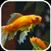 水族金鱼动态壁纸v1.0app下载_水族金鱼动态壁纸v1.0app最新版免费下载