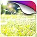阳光花圃动态壁纸v1.0app下载_阳光花圃动态壁纸v1.0app最新版免费下载