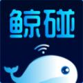 鲸碰app下载_鲸碰app最新版免费下载