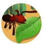 蚂蚁进化3d手游下载_蚂蚁进化3d手游最新版免费下载