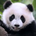 大熊猫狩猎手游下载_大熊猫狩猎手游最新版免费下载